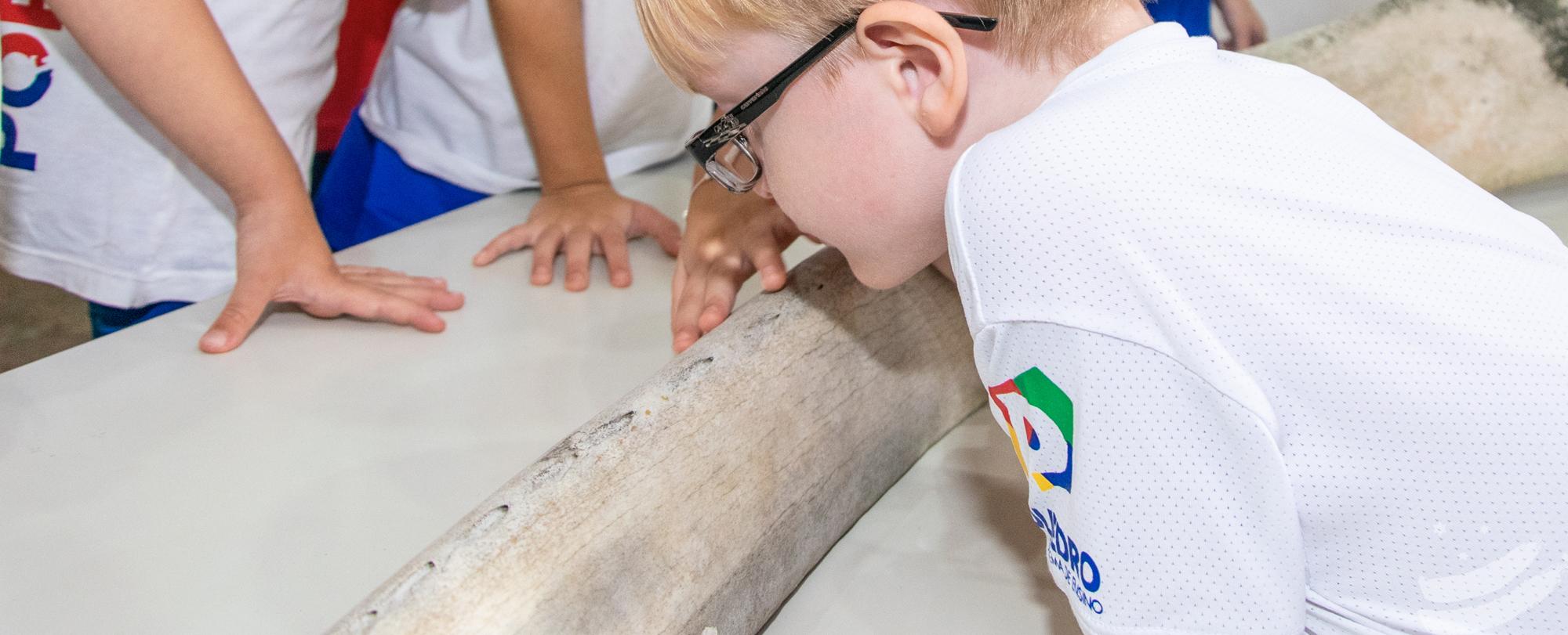 Gressus 5 estuda o osso de uma baleia-comum em Troca de Saberes
